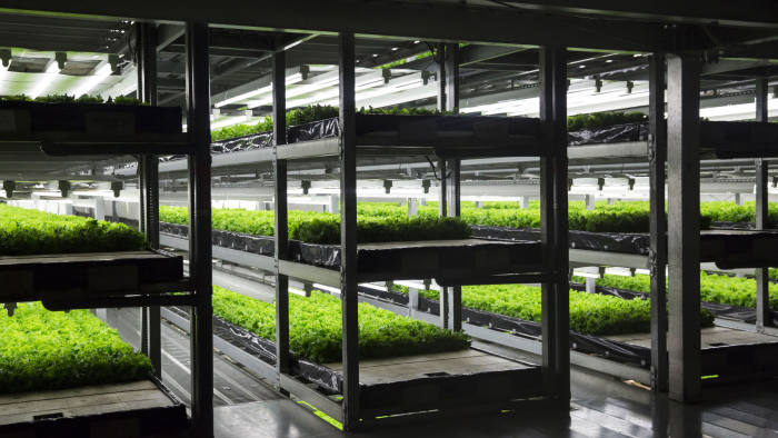 Lettuce is grown in an indoor farm at a Spread Co. plant in Kameoka, Kyoto Prefecture, Japan, on Tuesday, Oct. 2, 2018. Spread is preparing to open the world's largest automated leaf-vegetable factory. It's the company's second vertical farm and could mark a turning point for vertical farming -- bringing the cost low enough to compete with traditional farms on a large scale. Photographer: Tomohiro Ohsumi/Bloomberg