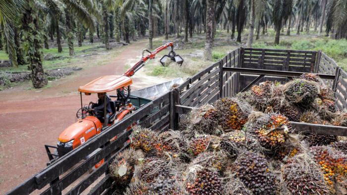 Harvested palm oil fruit bunches sit in a truck at the Genting Tanah Merah Estate, operated by Genting Plantations Bhd., in Johore, Malaysia, on Thursday, Nov. 14, 2019. Genting owns about 20 drones, and uses the services of other providers to monitor and map about 160,000 hectares of oil palms in Indonesia and Malaysia. Photographer: Joshua Paul/Bloomberg