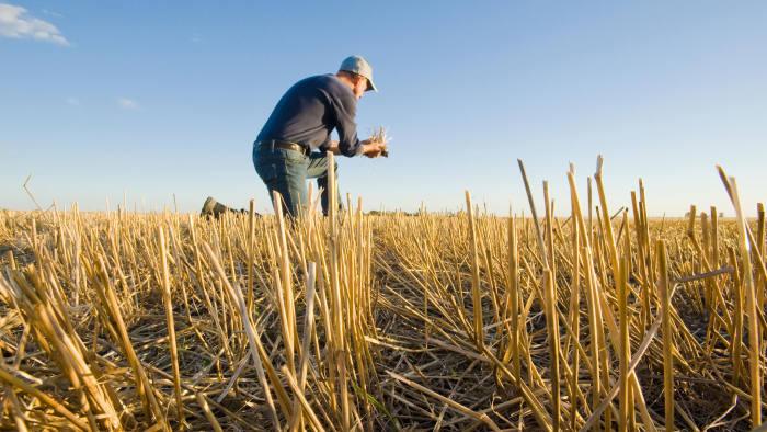 KCNPHN farmer in a field of grain stubble near Winnipeg, Manitoba, Canada
