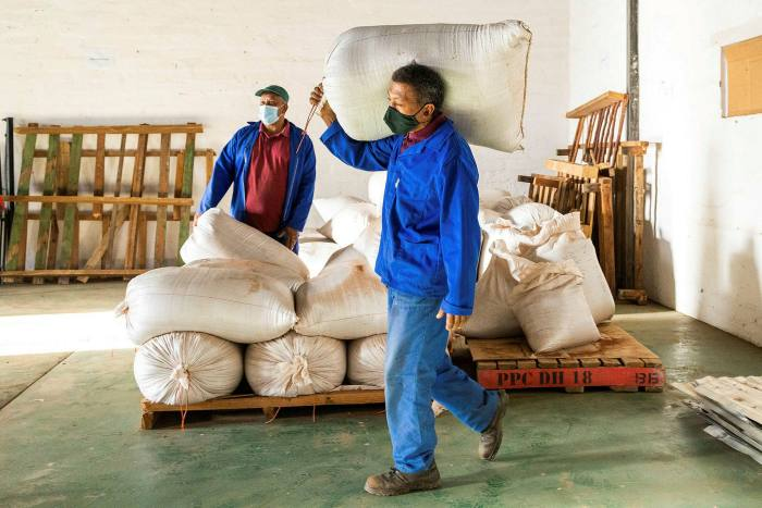 Workers with sacks of rooibos, part of the 20,000 tons South Africa produces annually