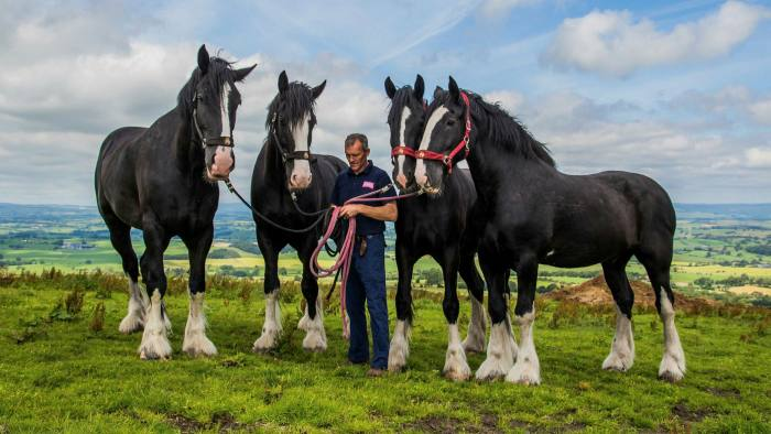 Thwaites, a UK brewer, was incorporated in 1897. The company used shire horses to deliver beer to its pubs and still maintains a stable