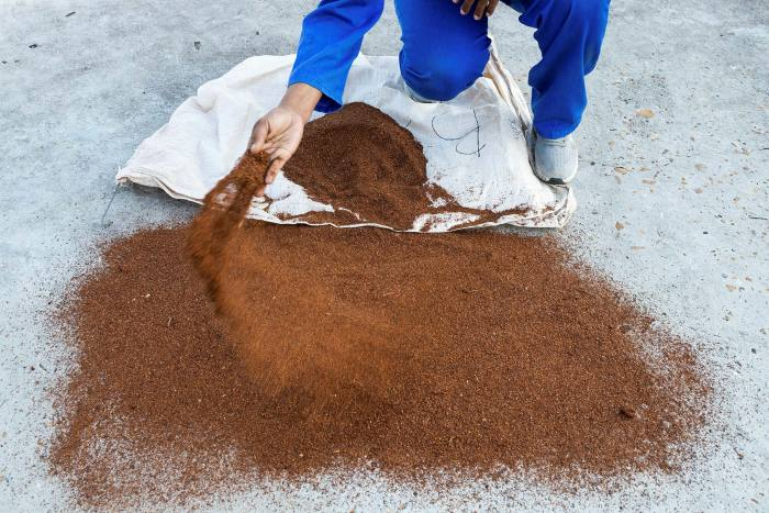 The rooibos is spread on concrete to dry in the sun