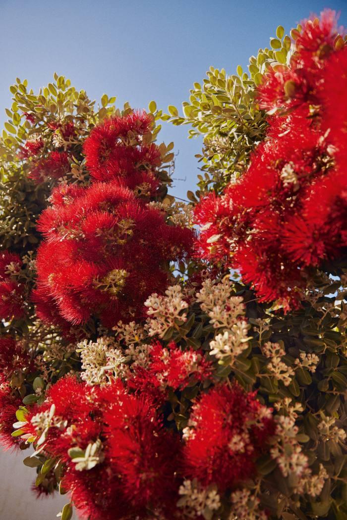 Local floraat Cala Mesquida