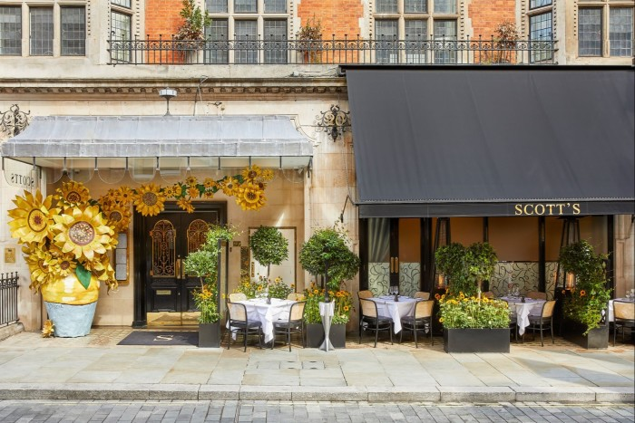 Sunflowers have arrived at Mayfair seafood institution Scott's this autumn