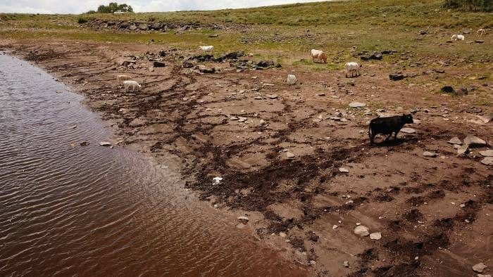 Cattle graze near a reservoir in Colorado. New standards for agribusiness debt aim to channel impact finance to the livestock sector
