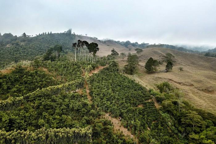 Nespresso employees spend three days on coffee farms in Costa Rica