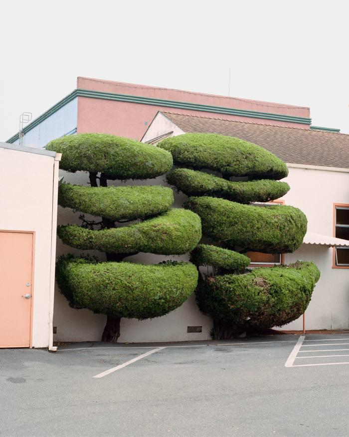 Topiary in California captured by Marc Alcock