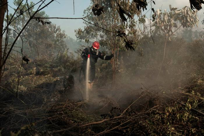 A fireman tackles a peatland fire in the Indonesian province of Riau last year