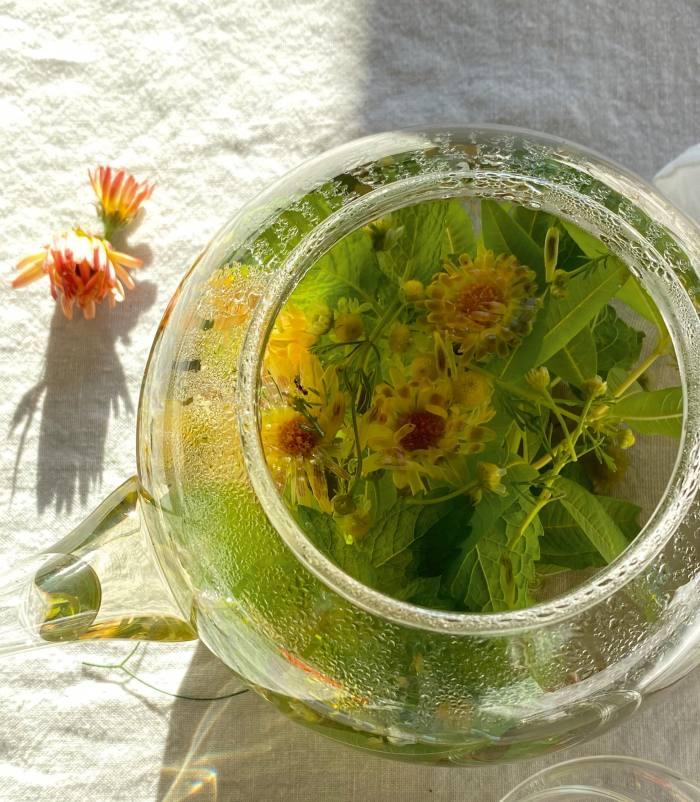 A pot of tea that Needleman made from her herbs