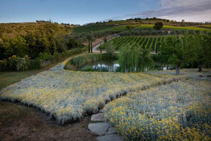 The helichrysum beds in Per Ama