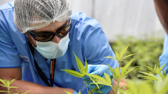 Questions remain over the legalised cannabis industry's medium-term growth prospects, despite the investor enthusiasm